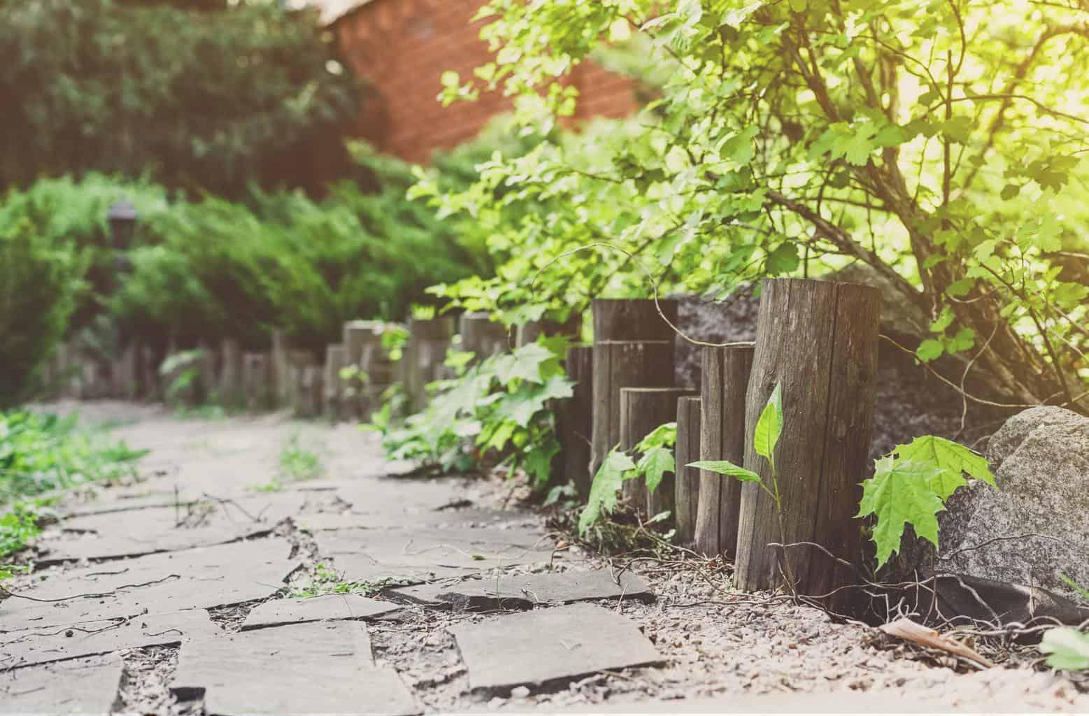 Landscape design, evergreen bushes and path