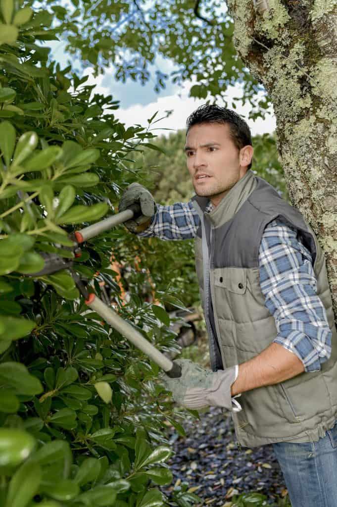 No more manual hedge trimming