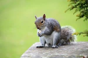 what to feed squirrels in the backyard
