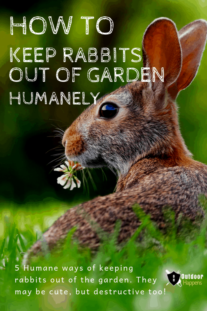 How To Keep Rabbits Out of the Garden - 5 Humane Solutions ...