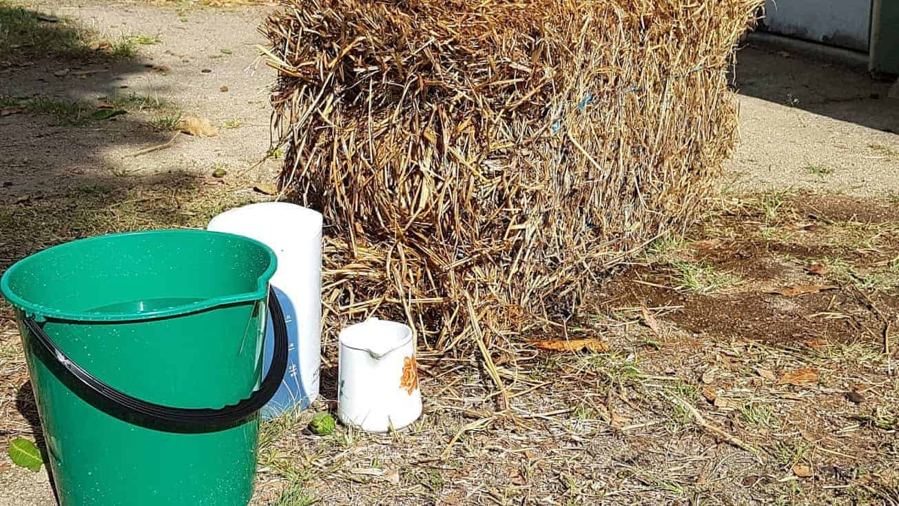 straw-bale-gardening-day-1