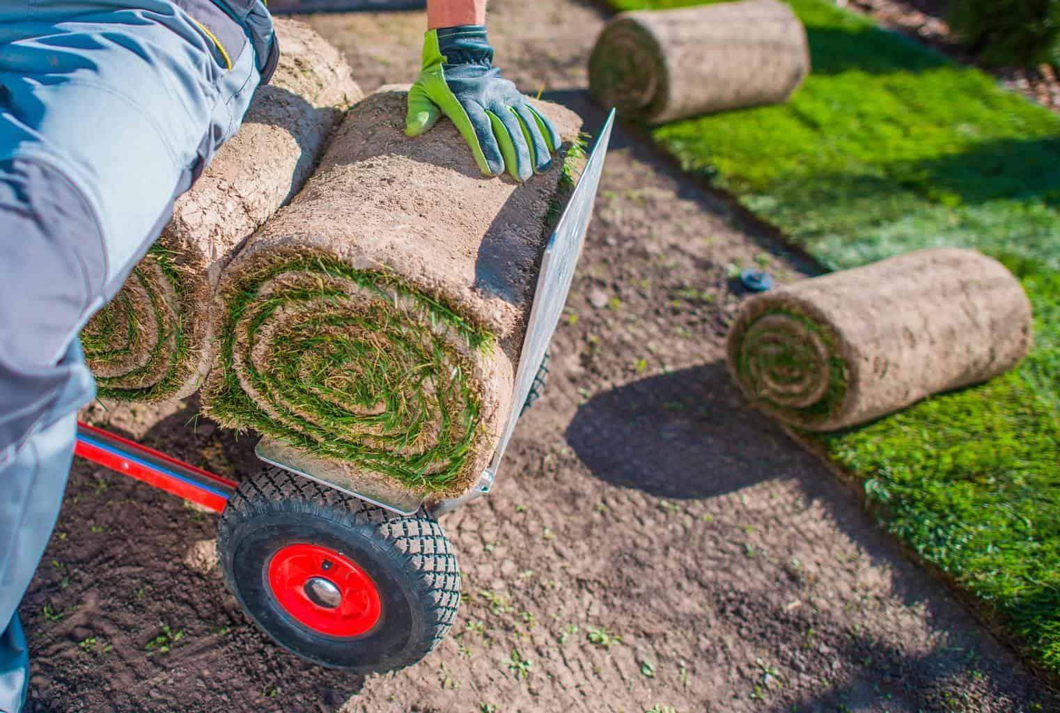 Grass-sod-or-turf