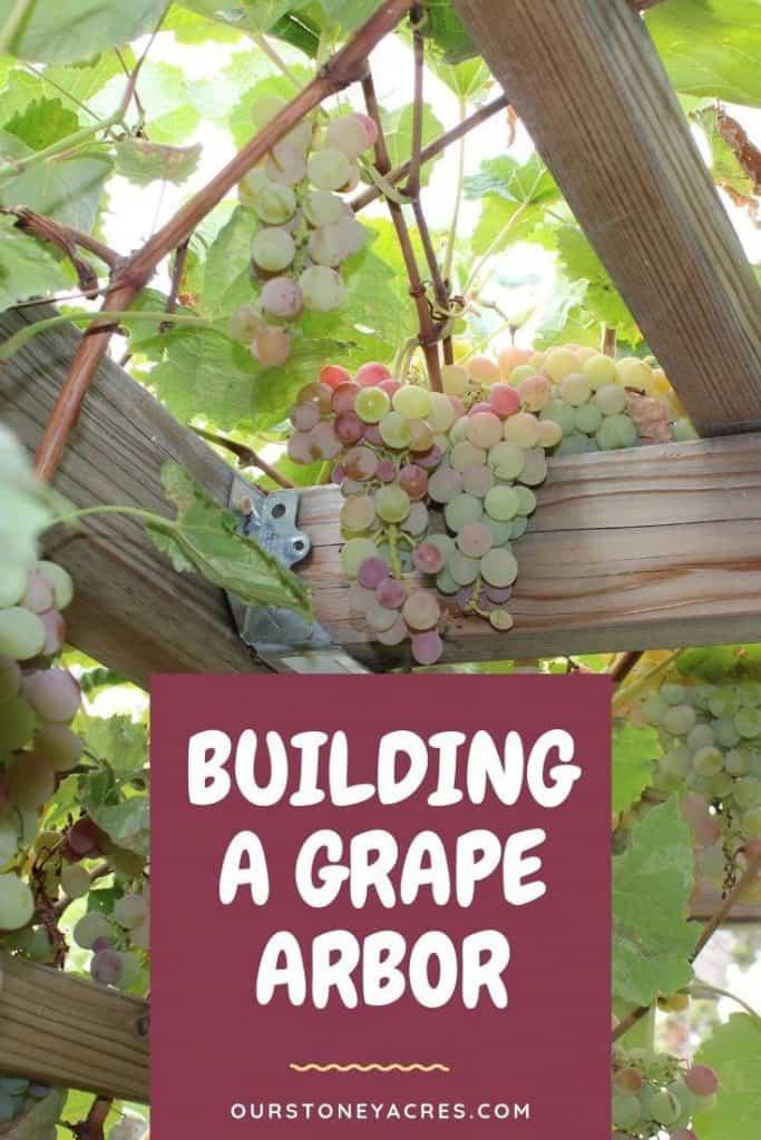 Building-a-Grape-Arbor-backyard