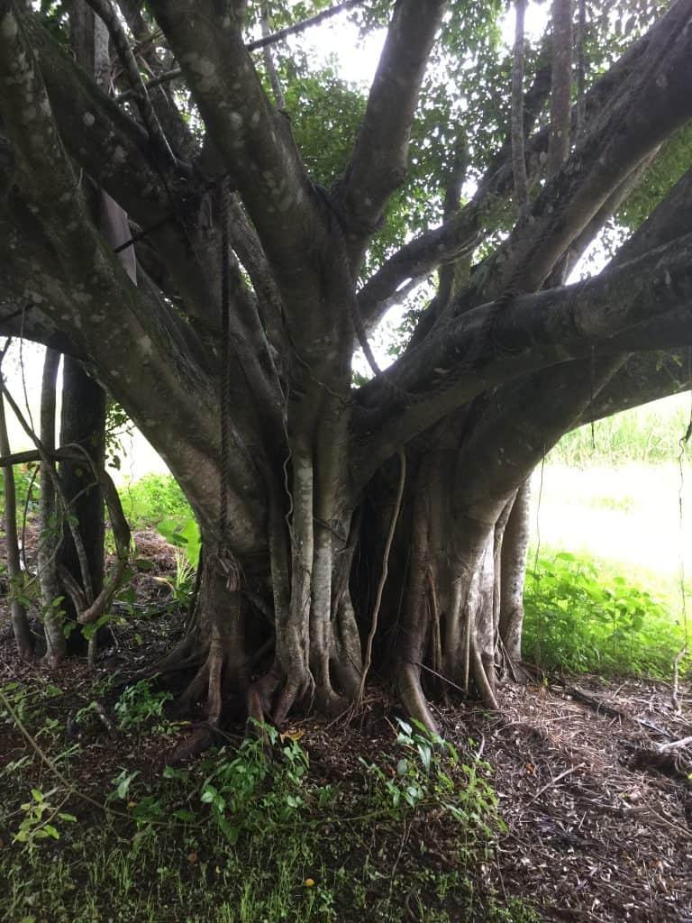 rustic-grape-trellis-tree