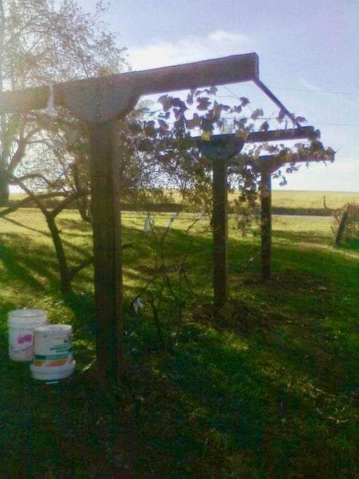 build-trellis-for-grapes