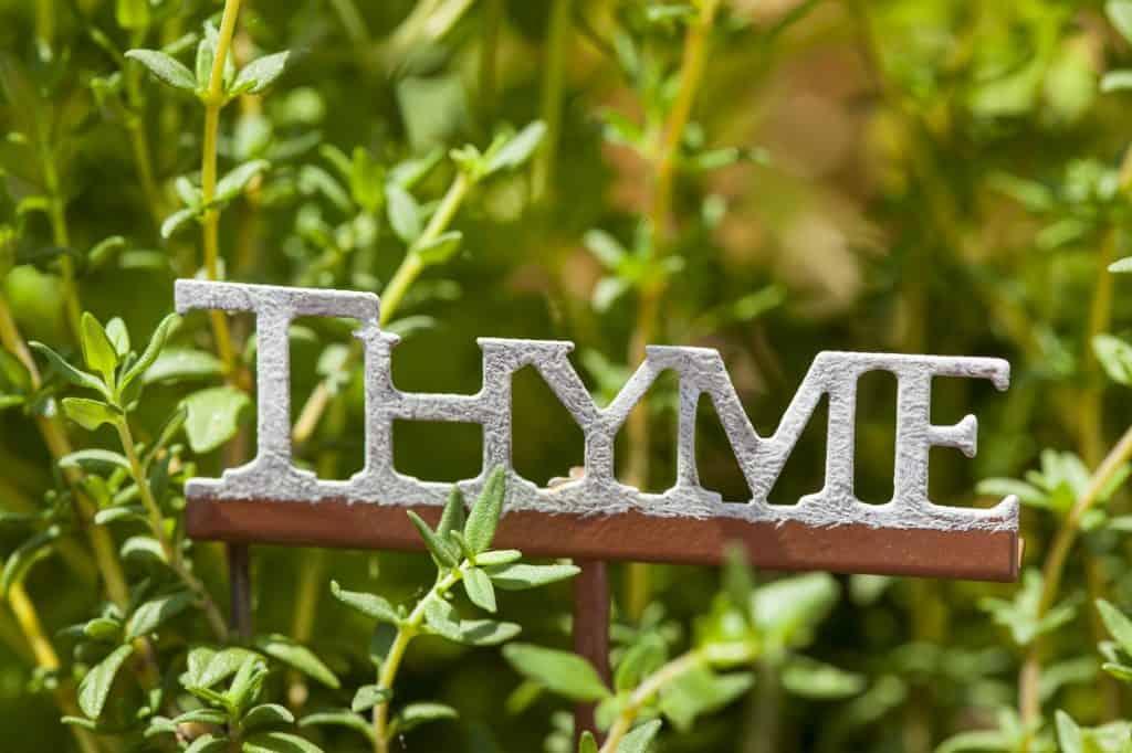 thyme-suvival-garden