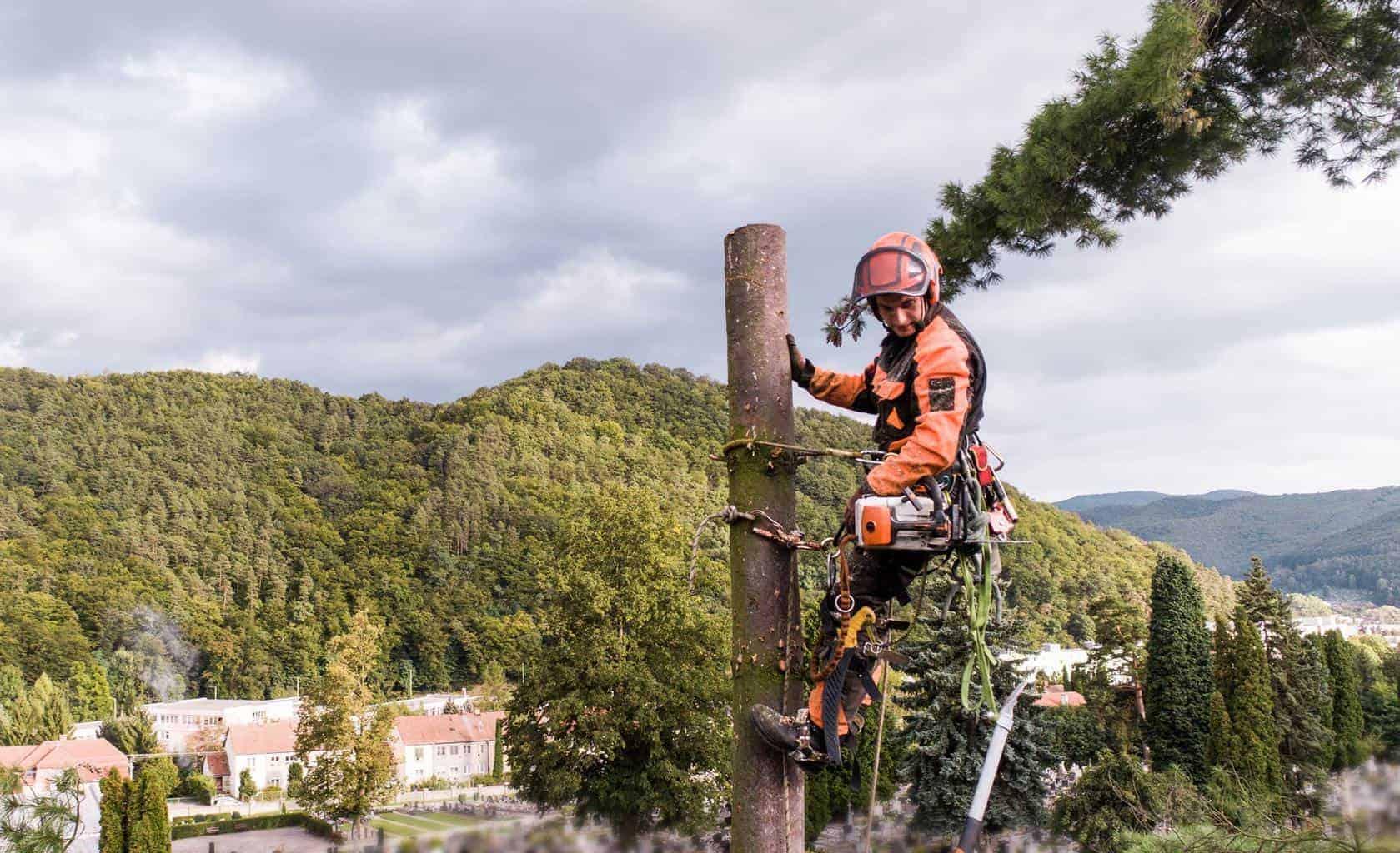 Arborist man with harness cutting a tree, climbing.