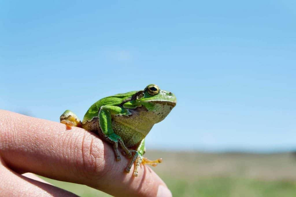 how-to-attract-frogs-backyard