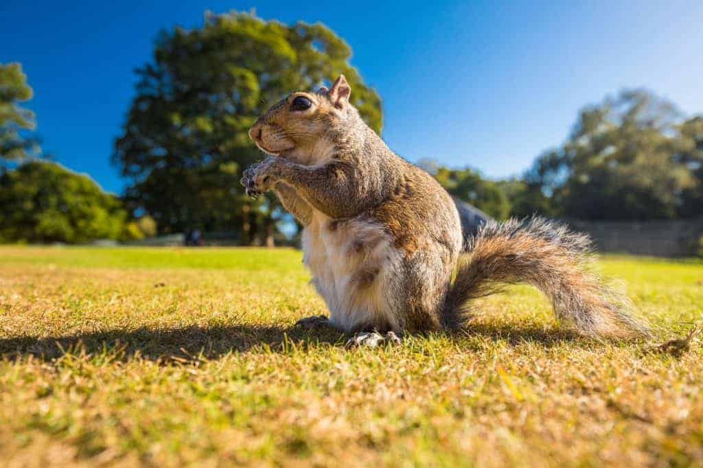 how-to-attract-squirrels-backyard
