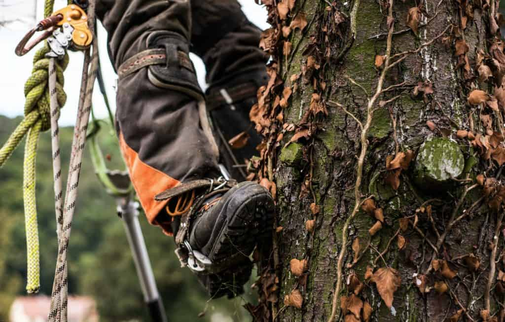 best-gas-pole-saw-no-climbing-trees