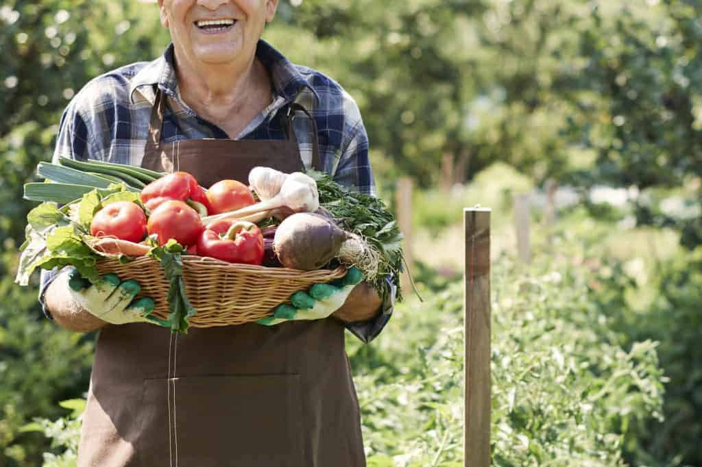 vegetable-gardening-for-beginners-resources