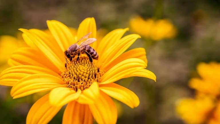 how-to-attract-bees-backyard