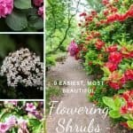 9-easy-to-grow-most-beautiful-flowering-shrubs-zones-7-8