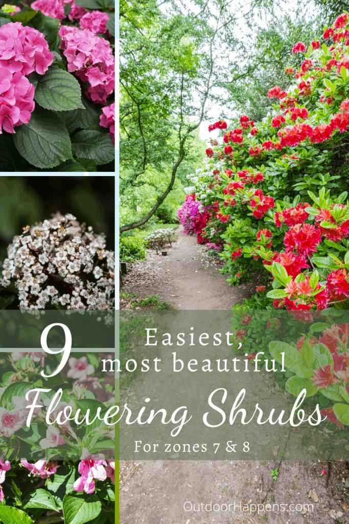 easiest-most-beautiful-flowering-shrubs-zone-7-8