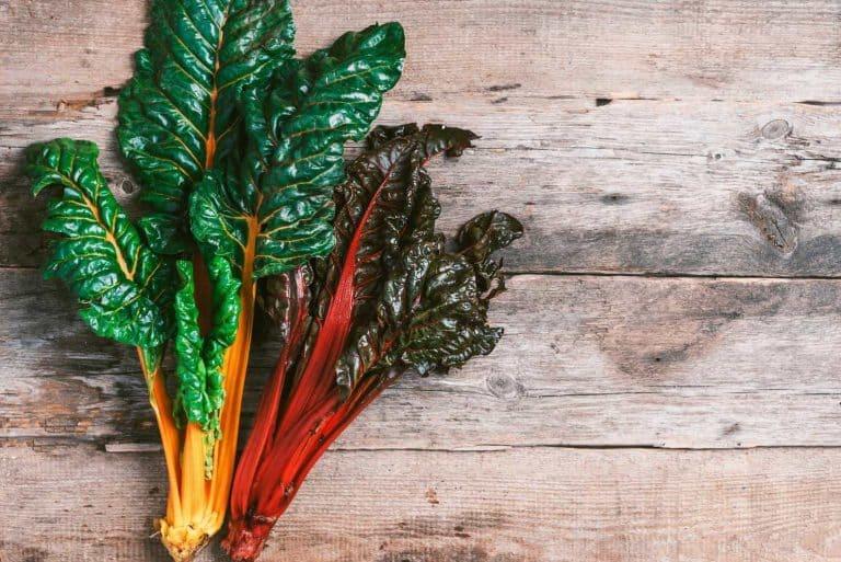 best-easy-grow-most-beautiful-vegetables-garden
