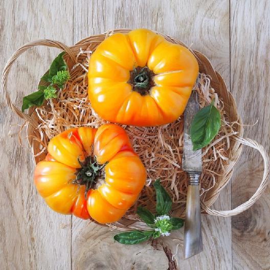 pineapple-tomato-easy-vegetable-garden