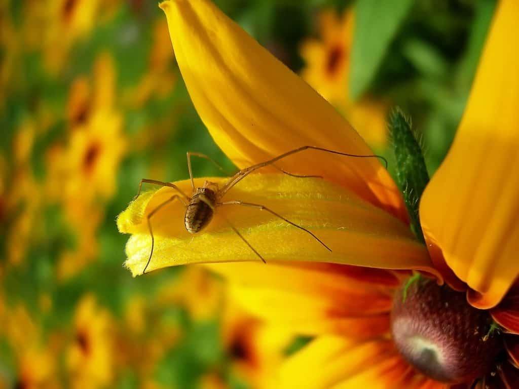 work-with-nature-gardening
