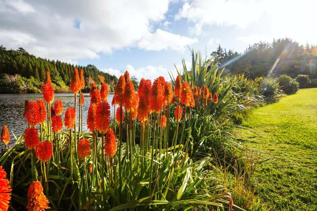 Aloe-flowering-succulent