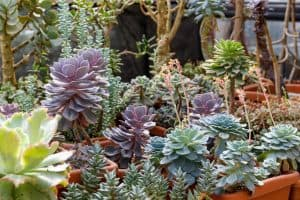 beautiful-flowering-succulents-cacti
