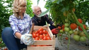 edible-backyard-summit-free-vegetable-garden-course