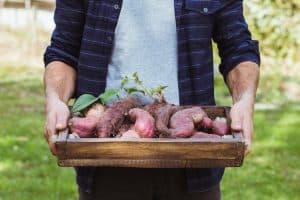 sweet-potato-companion-plants