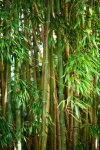 Bamboo-farming-homestead-income