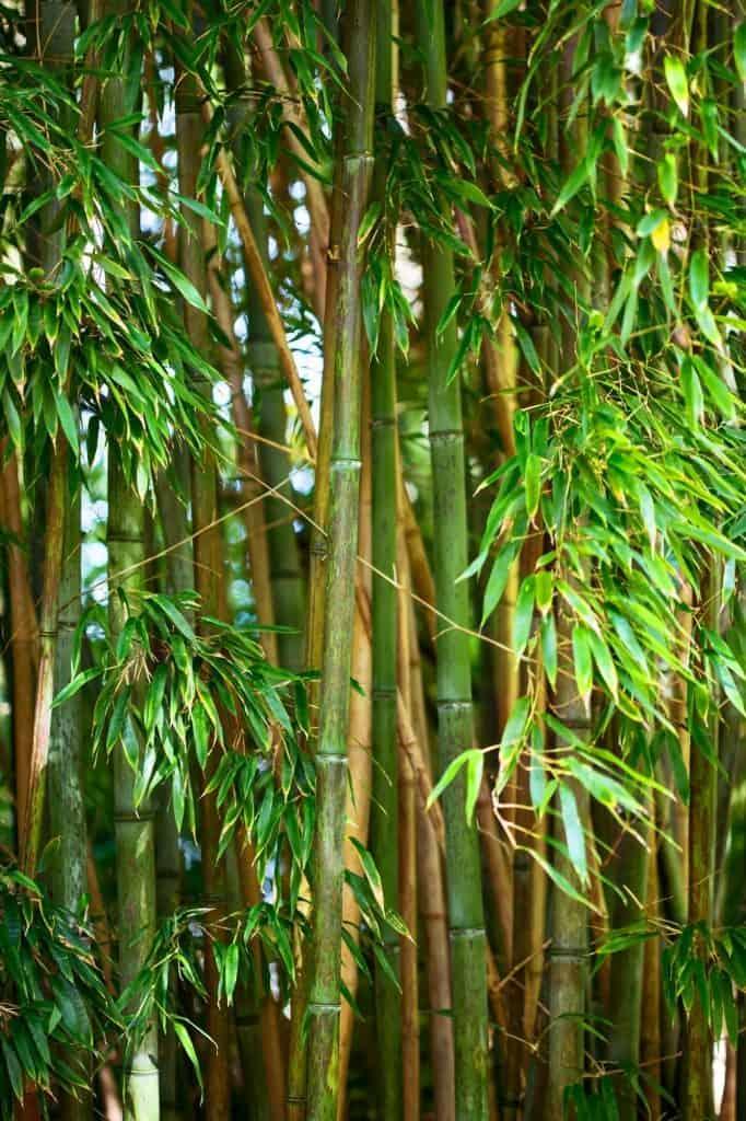 Bamboo-farming-homestead-income