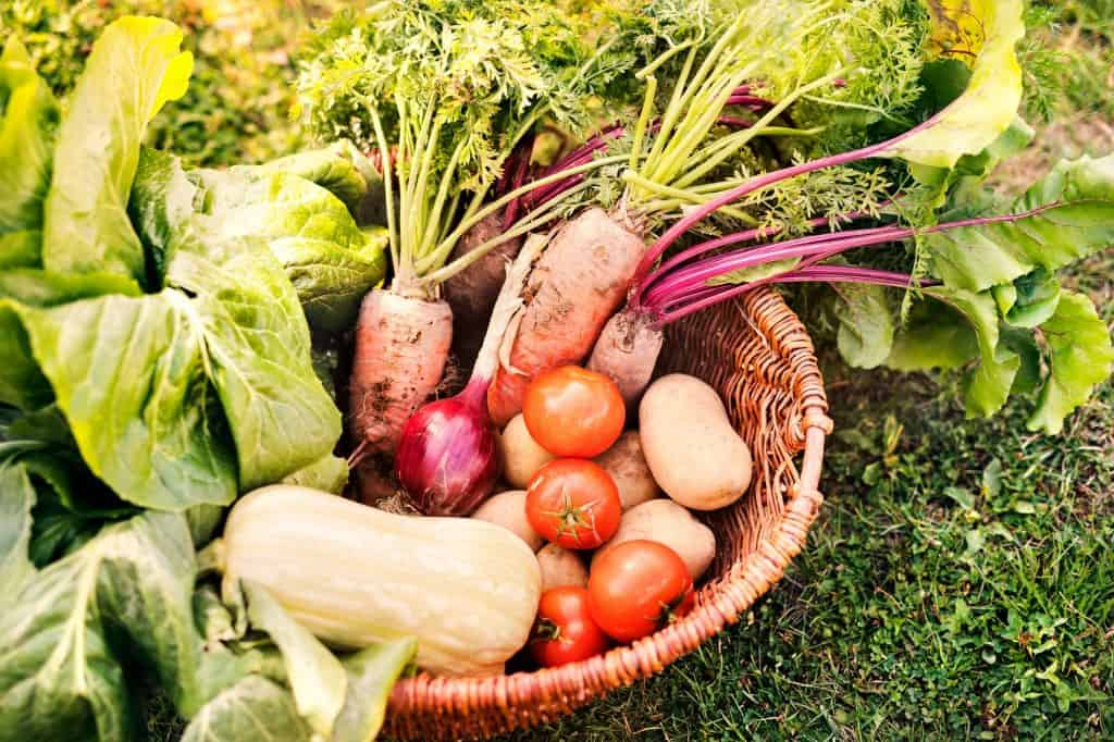 benefits-of-growing-your-own-food