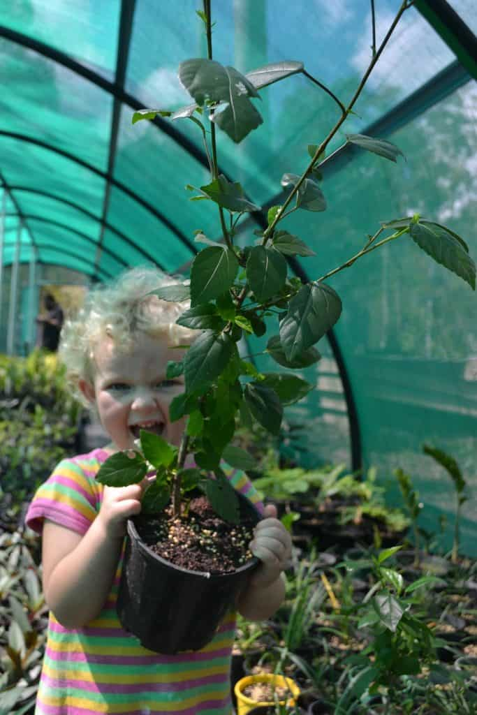 benefits-of-gardening