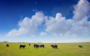 how-many-cows-per-acre