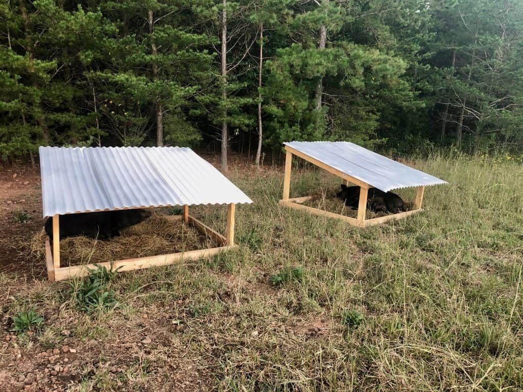 pigs-farrowing-huts-how-to-build