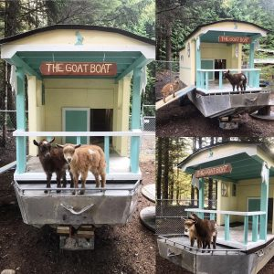 the-goat-boat-portable-goat-shelter-ideas