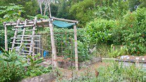 polyculture-farming-vs-monoculture