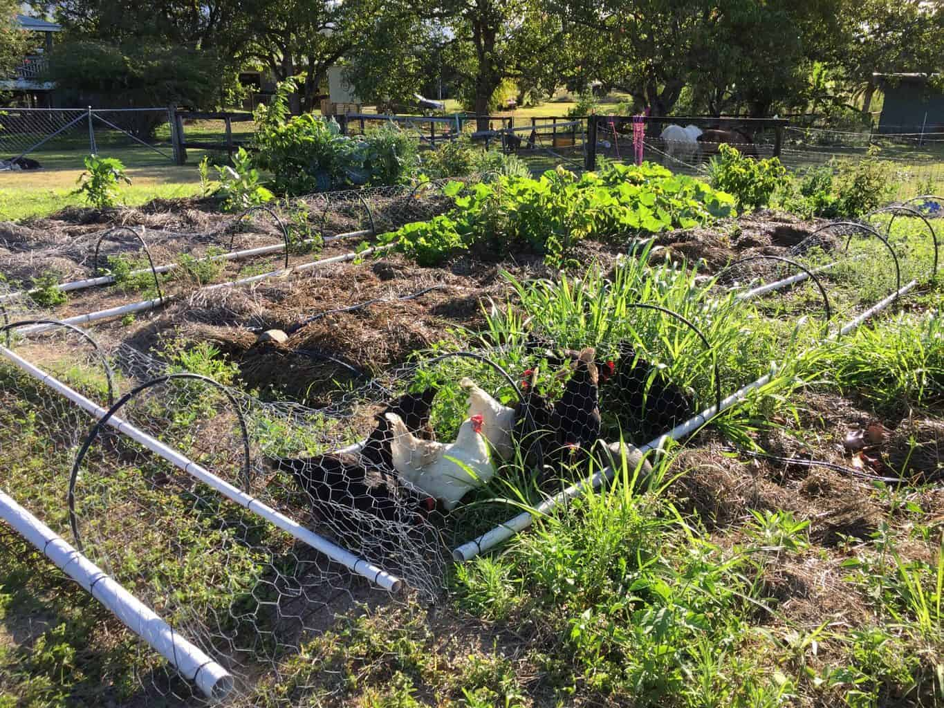 How to Start a Vegetable Garden From Scratch in Your ...