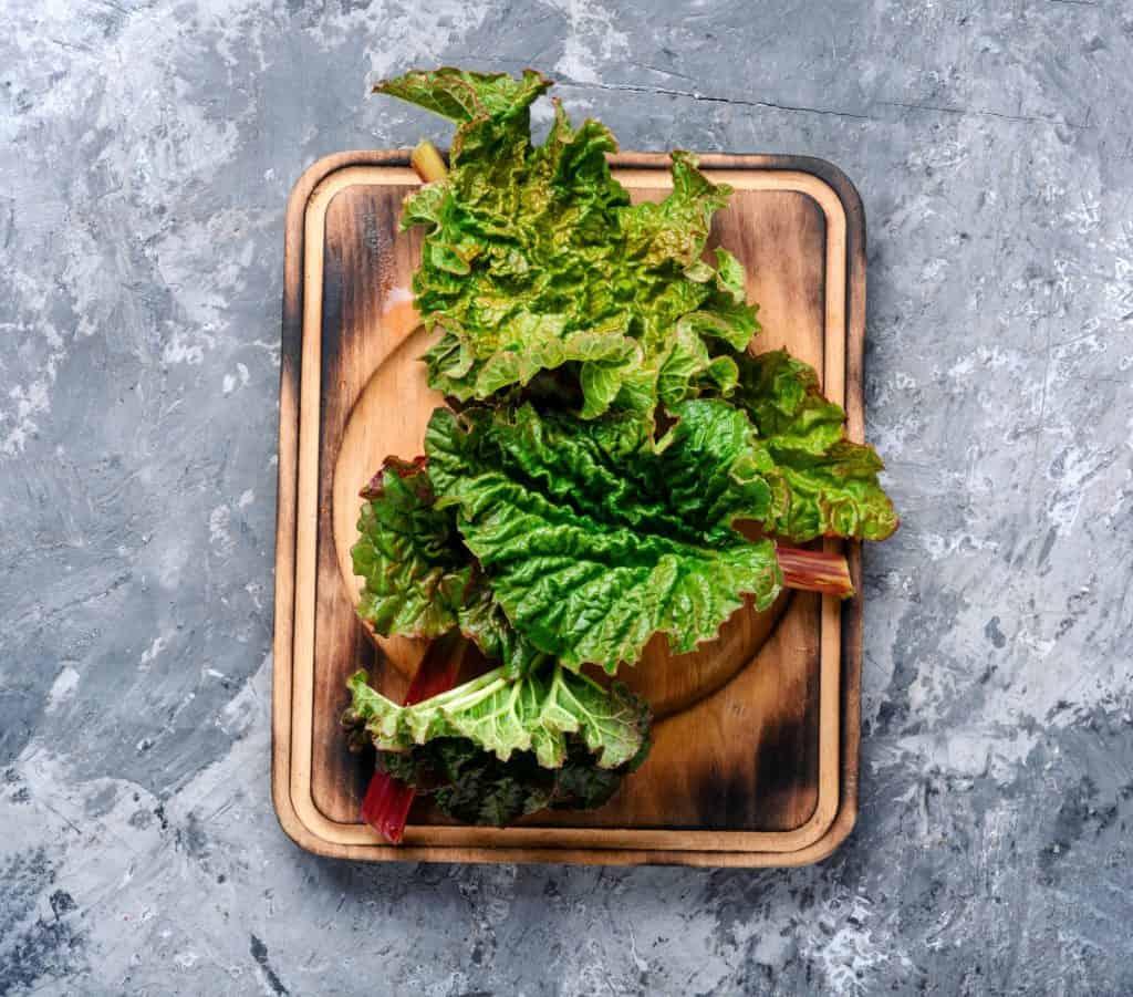 edible-leaves-guide-rhubarb