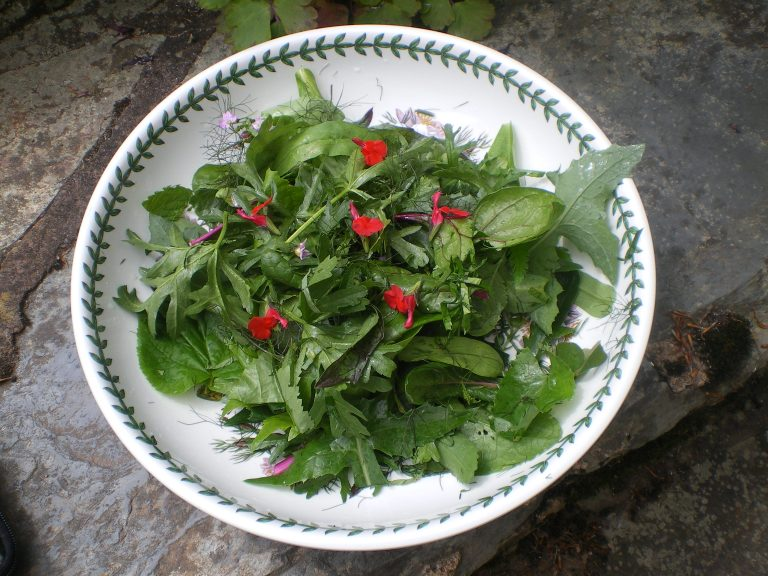 edible-tree-leaf-crops-salad