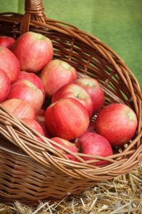 how-much-is-a-peck-of-apples-basket