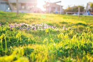 how-to-get-rid-of-lawn-full-of-weeds