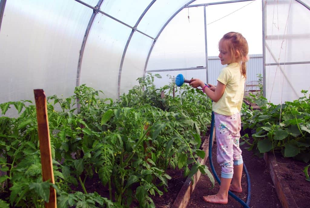 how-often-should-you-water-tomato-plants