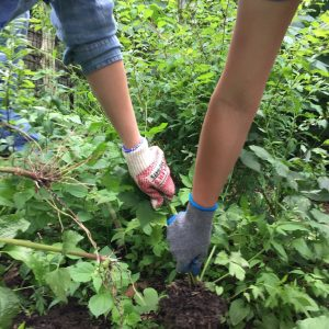best-way-to-remove-weeds-from-large-areas