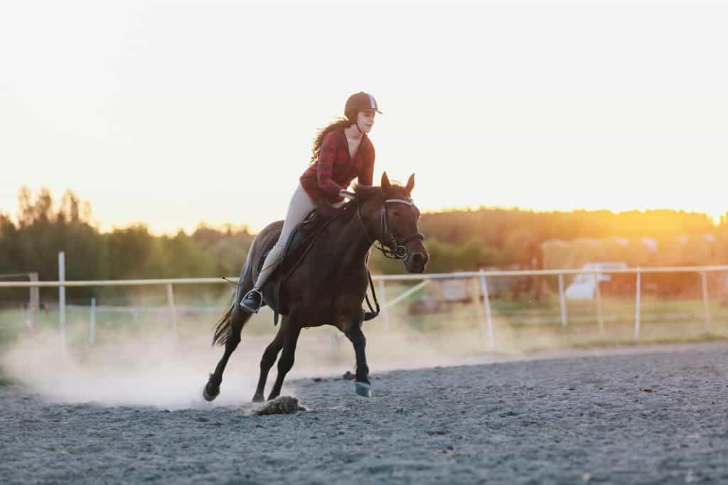 balking-horses-why-does-horse-balk