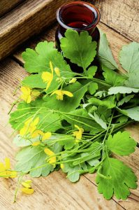 best-herbs-for-bruises-top-7-herbal-remedies