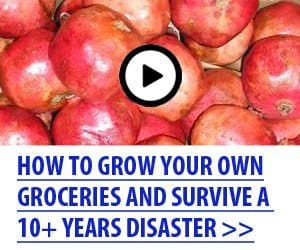 Homesteading for survival - grow your own food