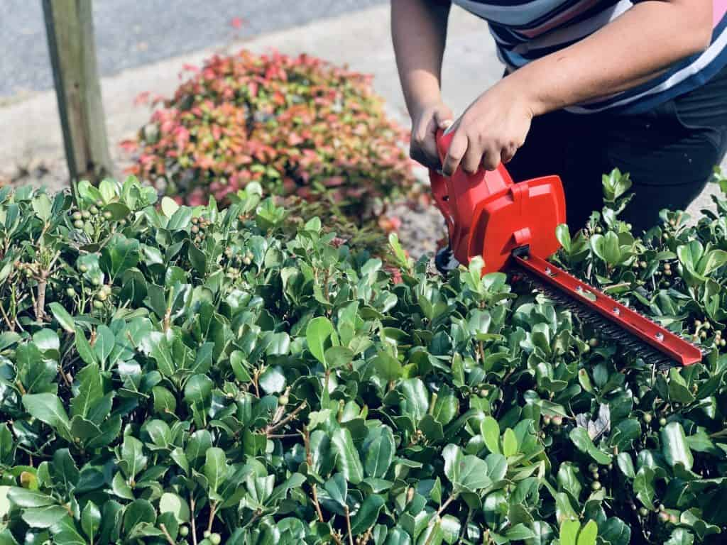 before-getting-started-with-electric-hedge-trimmer