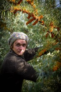 permaculture-food-forest-layers-seabuckthorn-shrub-with-berries