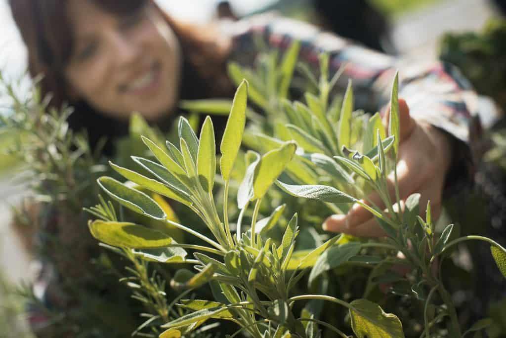 growing-herb-plants