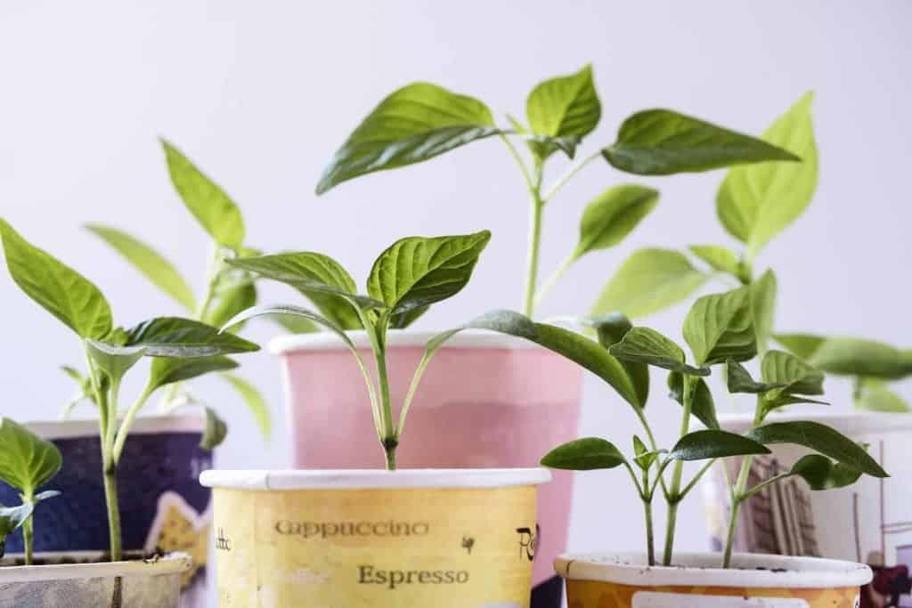 natural-organic-plant-cuttings-propagation