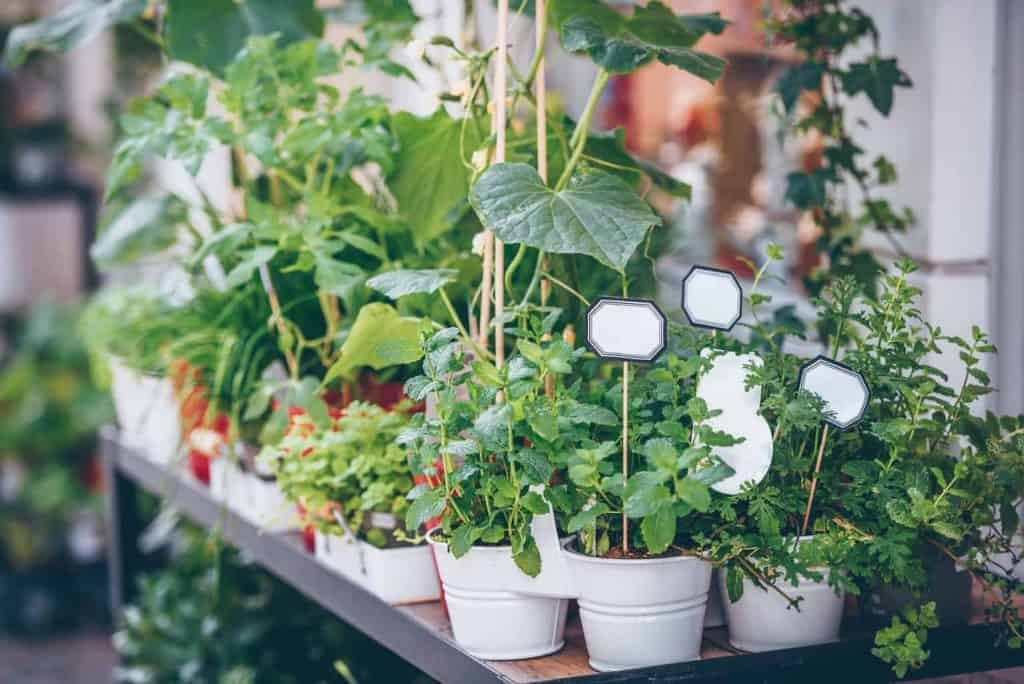 tips-for-homegrown-herbs
