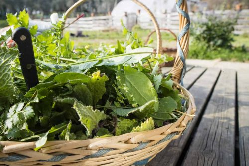 perennial-plants-survival-self-sufficient-gardens